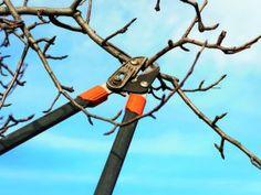 Řez jabloní   Výsledky vyhledávání   Flóra na zahradě Pruning Shears, Garden Tools, Flora, Gardening Scissors, Yard Tools, Plants