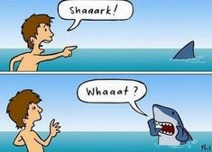 """What sharks probably think when we yell """"SHARK!"""" at the beach."""