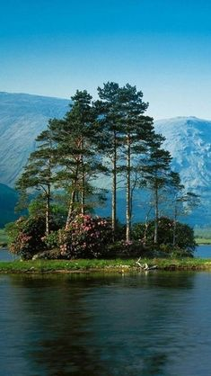 looks like a giant bonsai I pinned on my bonsai board this is magical**Scotland