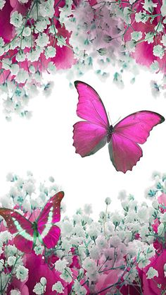 Mjjjjhhhhhhhh Butterfly Wings Images Art Pictures Photos Cute Wallpapers Phone