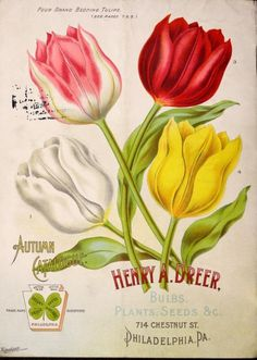 Backcover of 'Dreer's Autumn Catalogue 1897 - Bulbs, Plants, Seeds &c' with an illustration of 'Four Grand Bedding Tulips.'. Henry A. Dreer. 714, Chestnut St. Philadelphia, Pa. U.S. Department of Agriculture, National Agricultural Libraryarchive.org