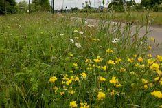 WAGENINGEN -Tijdens de Conferentie Nationale Bijenstrategie op 22 januari kondigt De Vlinderstichting, onder de werktitel 'Kleurkeur', een nieuw keurmerk aan voor goed maaibeheer van bermen en andere groenstroken. Aannemers en groenbedrijven die bij het beheer rekening houden met biodiversiteit, waar bestuivers als vlinders en bijen wel bij varen, komen in aanmerking voor dit keurmerk.  Kleurkeur  Bijenstrategie, maaibeheer