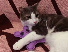 I definitely didn't slide it under his arm to make it look like he's hugging it. | Here's How To Make A Tiny Stuffed Animal For Your Cat