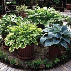 Hostas are great! And best of all...they come back every year :))