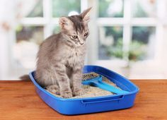 Is there a cat litter that doesn't track? How do you stop cat litter tracking? Is there a no-mess litter box? Combat your cat's litter tracking. Best Cat Litter, Litter Box, Litter Training Kittens, Cat Urine Smells, Cat Health Care, Cat Nutrition, Nutrition Guide, Cat Signs, Cat Pee