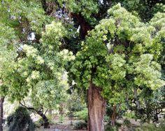 Orto Botanico Sicilië - Mieke Löbker- Picasa Web Albums