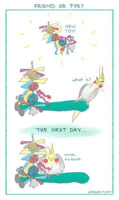 Funny Parrots – A Funny Parrot Videos Compilation 2015 Funny Birds, Cute Birds, Cute Funny Animals, Cockatiel, Budgies, Funny Parrots, Crazy Bird, Parrot Bird, Bird Toys