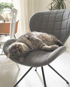 de OMG-stoel van Zuiver