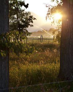 Meadowbrook Farm: life on the farm. Miss, miss, miss views like this!!!