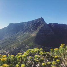 It's time to celebrate spring in Cape Town! Clear Sky, Time To Celebrate, Cape Town, Natural Beauty, Alternative, Weather, Photo And Video, Mountains, Lifestyle