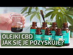 Olejki CBD (z kwiatów konopi) - jak sięje pozyskuje? | Konopie Są Dobre - YouTube Osho, Cannabis, Youtube, Ganja, Youtubers, Youtube Movies