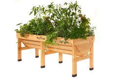 Veg Trug Medium VegTrug/Wooden Planter Ideal for gardening gift Raised Garden Planters, Patio Planters, Wooden Planters, Raised Garden Beds, Raised Beds, Raised Gardens, Veg Trug, Planter Beds, Pot Jardin