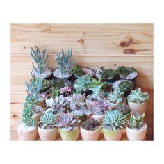 Vivarium Suculents Vivarium, Succulents, Plants, Succulent Plants, Plant, Terrarium, Planets