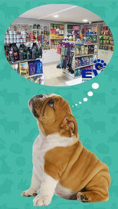 Una tienda de animales con reparticin de producto future pet en evi podrs encontrar productos y accesorios para tus peluditos http solutioingenieria Gallery