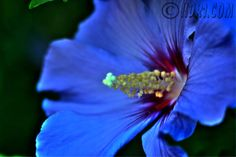 Purple+Flowers+Pictures+And+Names | Hdr Flowers (high dynamic range images) and other plants on www.hdr1 ...