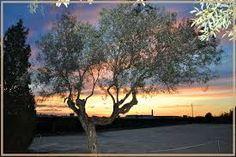 La lucha contra la mosca del olivo: Bactrocera oleae (Gmelin)