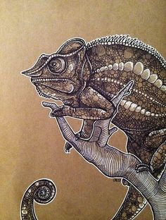 Black and white ink on toned paper. Chameleon! Copyright Cei A Lambert 2013