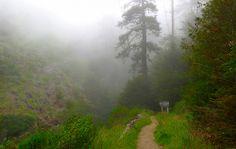 Big Sur Redwoods 3
