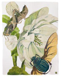 Sarah Graham, artist, botanical works on paper, 2008 to present. Botanical Art, Botanical Illustration, Illustration Art, Sarah Graham Artist, Flower Artists, Artist Art, Asian Art, Japanese Art, Art Paintings