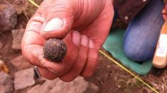 "A musket ball found at an archaeological site at the Kerry Lodge Bridge near Launceston. Convicts were housed at a ""road gang station"" next to the original route of the Hobart Road from 1834.  They quarried stone and worked to construct the Strathroy Bridge — now known as Kerry Lodge Bridge — on the original Launceston to Hobart highway route."