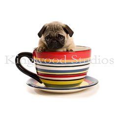 Pug In A Mug #pug