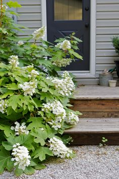 Oakleaf Hydrangea 'Snowflake': Gardenista You can't use this in the front yard LG but in partial sun in the back! Oakleaf Hydrangea Landscape, Hydrangea Landscaping, Driveway Landscaping, Landscaping Plants, Landscaping Ideas, Garden Shrubs, Shade Garden, Garden Plants, Flower Gardening