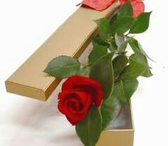 * Flowers For You, Red Roses, Plants, Melbourne, City, Pictures, Cities, Plant, Planets