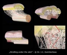 fascia: from Dr. Guimberteau's breakthrough DVD, Strolling Under the Skin.