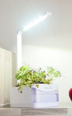 Bouturage de ta Monstera - Jardiner en Ville Vase Transparent, Stuff Stuff, Composting, Plant Cuttings, Brickwork