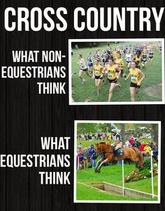 Popular Cross Country Running Tips - Horses Funny - Funny Horse Meme - - Too true! The post Popular Cross Country Running Tips appeared first on Gag Dad. Funny Horse Memes, Funny Horse Pictures, Funny Horses, Horse Humor, Animal Pictures, Funny Animals, Funny Memes, Equestrian Memes, Equestrian Problems