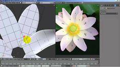 Modeling a Lotus in Blender