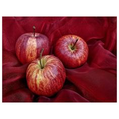 Gorgeous monochrome still life  today's cover photo by creative Tabaluga #morguefile #forcreativesbycreatives #apples #fabric #texture #silky #red #still_life