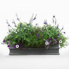 Top Butterfly Container Garden Ideas: Go for the Blues: A. Petunia 'Supertunia Royal Velvet' -- 4;  B. Salvia guarantica 'Black and Blue' -- 2;  C. Angelonia 'Serena Lavender' -- 2;  D. Nierembergia 'Purple Robe' -- 6;  E. Nemesia 'Blue Lagoon' -- 6