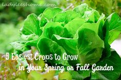 Easiest cool weather crops to grow in your spring or fall garden.