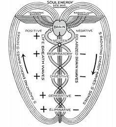 Caduceus                                                                                                                                                                                 Mehr