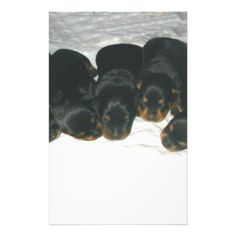 #Rottweiler Puppies Stationery - #rottweiler #puppy #rottweilers #dog #dogs #pet #pets #cute