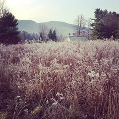 """Morning frost in the Berkshire mountains"" Photo taken by @kalonstudios on Instagram (12/03/2013)"