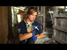 Mississippi Puppy Mill a Living Horror - May 22, 2013 Grab a tissue this will pierce your heart.