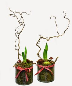 forcing bulbs has always seemed a bit weird to me--maybe it would be fun to do for plant week