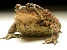 Toads....loved toads when I was a kid and many ended up in my house to my mom's surprise!