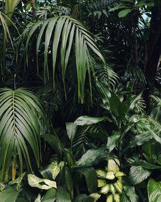 Jungle vibes #HaarkonGreenhouseTour #HaarkonInScotland