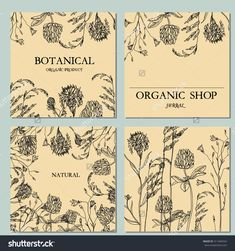 stock-vector-vector-template-vintage-floral-label-with-hand-draw-wild-flowers-and-herbs-layout-mockup-design-311404334.jpg 1,500×1,600 pixels