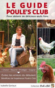 Nos conseils pour l'achat de vos poules : le nombre, les races, où les acheter. Savoir reconnaître une poule en bonne santé pour acheter des sujets sains et sans maladies.