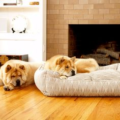 Felix Chien - Pearl Lounge Dog Bed, $108.00 (http://www.felixchien.com/pearl-lounge-dog-bed/)