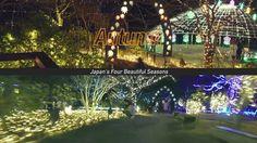Japan's No.1 Illumination! Let's go and see the Flower Fantasy at Ashikaga Flower Park #japan #japankuru #japantravel #japanese #tochigi #ashikaga #flowers #fuji #japanview #illumination