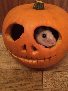 Hugo the hamster in a pumpkin :)
