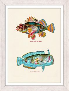 Vintage hawaian  fishes no02 Sea fish collage sea by seasideprints, $12.00