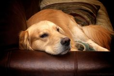King of the Sofa, via Flickr.