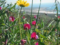 Gerald Freeman's Bookish Art Blog.: É Primavera agora, meu Amor!