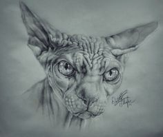 Hairless Cat Drawing (Pencil Sketch)